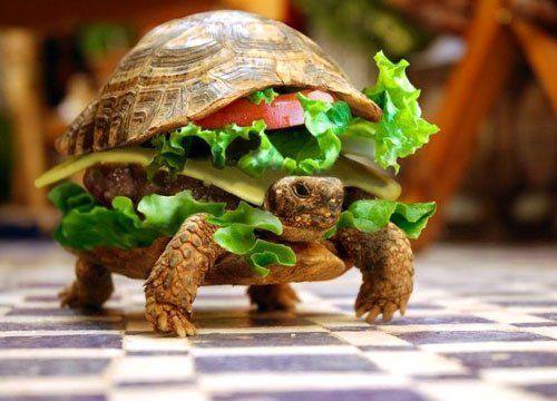 Slow Food sau bucuria de a manca
