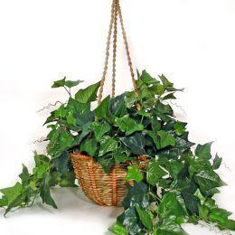 plante de casa