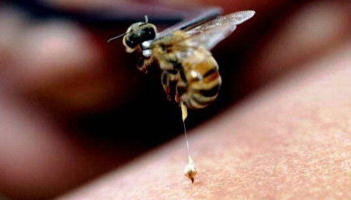 fagure de miere venin de albina