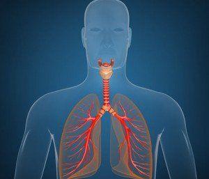 beneficiile consumului de peste functionarea sistemului respirator