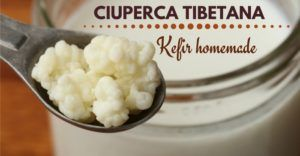 ciuperca-tibetana