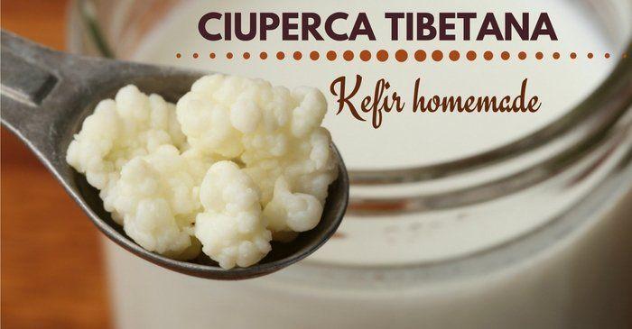 Ciuperca tibetana – Cum sa consumi kefir sanatos, homemade